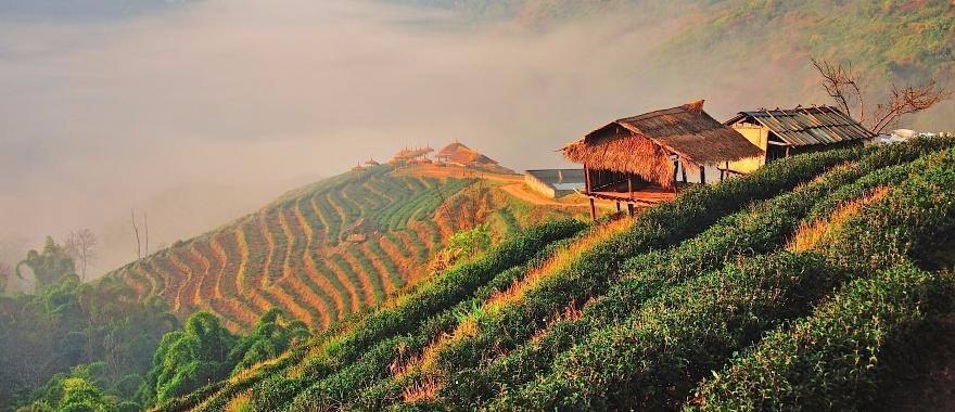tuor thai land